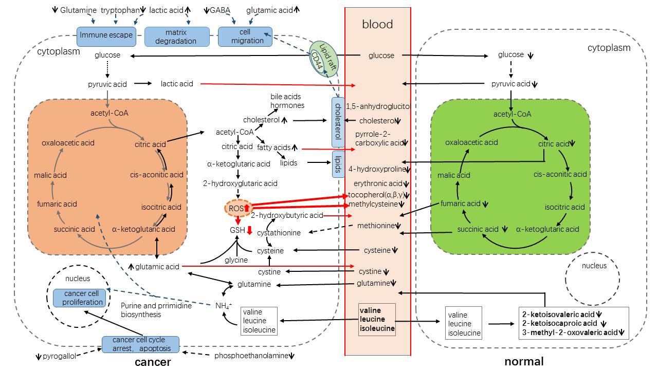 代谢组学-脂质-代谢流